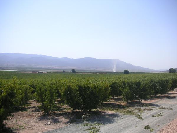 maquinaria-agricola-prepodadora-arboles-17