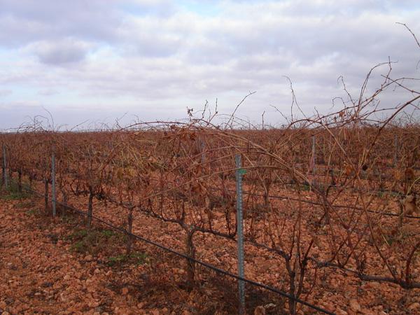maquinaria-agricola-prepodadoras-viña-en-espaldera-17