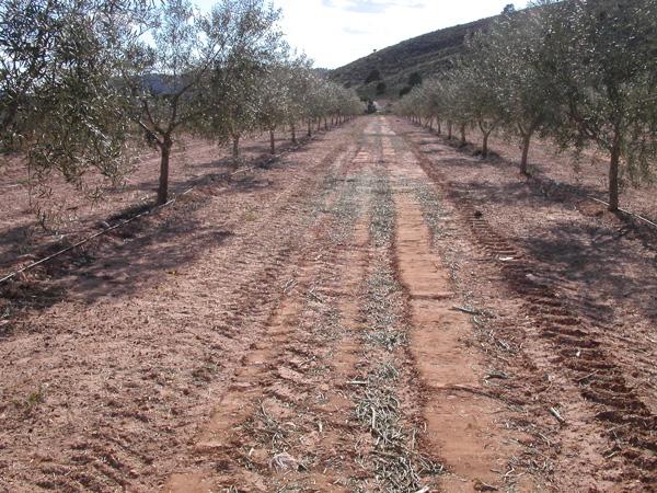 maquinaria-agricola-trituradora-desbrozadora-reforzada-15