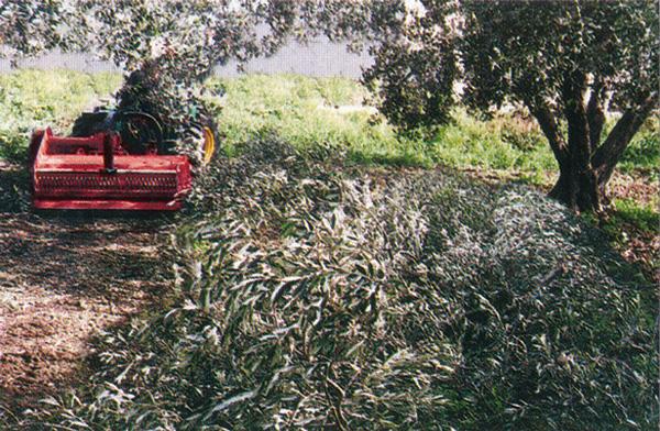 maquinaria-agricola-trituradora-super-reforzada-8