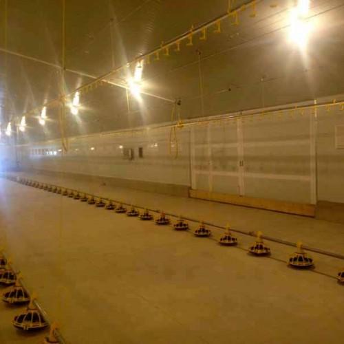 Granja Avícola para el Engorde de Pollos en Quintanar del Rey 2