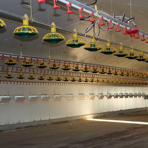Granja Avícola para Engorde de Pollos en La Roda