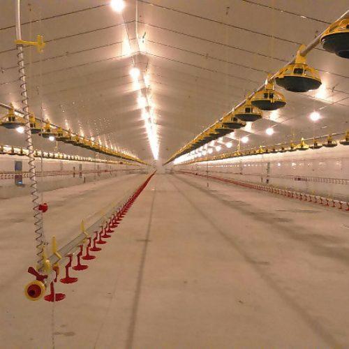 Granja Avícola, Naves de Pollos de Engorde en El Viso