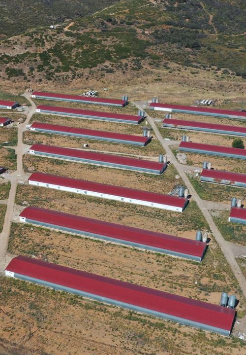 Construcción granjas avícolas en Humanes