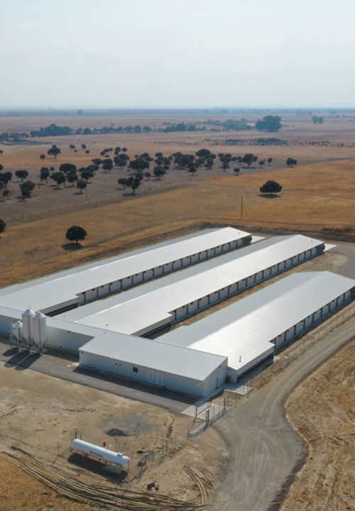 Construcción granjas avícolas para Ibergallus